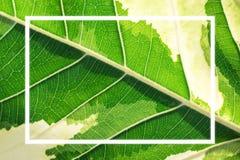 Marco blanco en un fondo verde de la licencia Foto de archivo