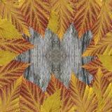 Marco brillante de las hojas en la tabla rústica de madera gris vieja Hojas secas presionadas alfombra, fondo de la frambuesa y d Imagenes de archivo