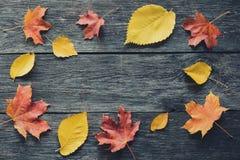 Marco caido de las hojas en fondo de madera Fotos de archivo libres de regalías