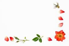 Marco color de rosa de la frontera de la naranja aislado en el fondo blanco Fotografía de archivo libre de regalías