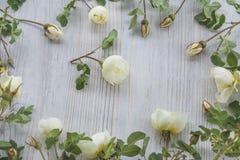 Marco color de rosa salvaje blanco de las flores Fotos de archivo libres de regalías