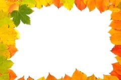 Marco colorido de las hojas Foto de archivo