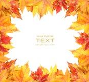 Marco colorido de las hojas de otoño en blanco Fotografía de archivo