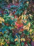Marco colorido del otoño fotografía de archivo libre de regalías