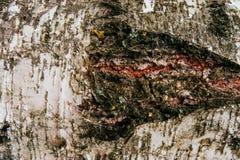 Marco completo de la textura del árbol de corteza en naturaleza Fotos de archivo libres de regalías