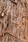 Marco completo de la textura del árbol de corteza en naturaleza Imagenes de archivo