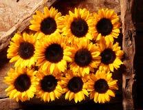 Marco completo de las floraciones de la flor en filas Fotos de archivo
