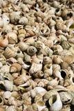 Marco completo tirado de shelles Imagen de archivo