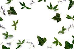 Marco con las hojas del verde y las flores púrpuras Imagen de archivo libre de regalías