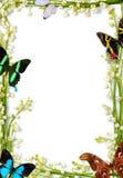 Marco con las mariposas Fotos de archivo libres de regalías