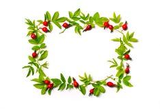 Marco cuadrado con las hojas y las flores rojas, bayas Endecha plana Imágenes de archivo libres de regalías
