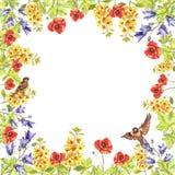 Marco cuadrado de la acuarela del eremurus, perritos, campanillas, hojas, gorriones stock de ilustración