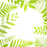 Marco cuadrado de la primavera y del verano con verde claro Foto de archivo