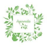 Marco cuadrado verde con la colección de plantas del ayurveda Silueta de ramas en el fondo blanco Foto de archivo