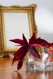 Marco de Autumn Leaves y de la foto Fotografía de archivo