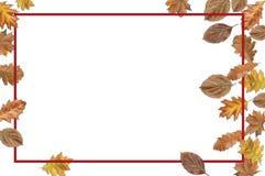 Marco de Bordo con las hojas de otoño para la acción de gracias en blanco Foto de archivo