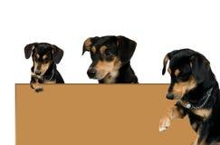 Marco de Brown con los bordes y el perro negro Imágenes de archivo libres de regalías