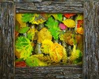 Marco de Brown y fondo de hojas caidas Foto de archivo