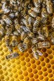 Marco de la abeja Imagenes de archivo