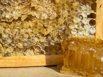 Marco de la abeja con la miel Imagenes de archivo