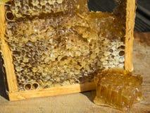 Marco de la abeja con la miel Foto de archivo libre de regalías