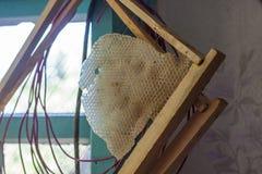 Marco de la abeja con una parte de panales encerados Foto de archivo