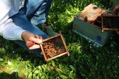 Marco de la abeja del arma nuclear Foto de archivo libre de regalías