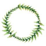 Marco de la acuarela con las hojas tropicales greenery Ilustraci?n del dise?o floral element stock de ilustración