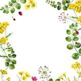 Marco de la acuarela de la flor fotografía de archivo libre de regalías