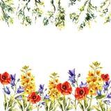Marco de la acuarela de las campanillas, perritos, eremuruses, hojas, brunches de árboles stock de ilustración