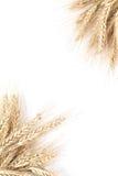 Marco de la cebada Fotografía de archivo libre de regalías