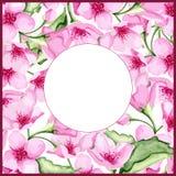 Marco de la cereza del flor Imágenes de archivo libres de regalías