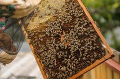 Marco de la colmena, abeja de la miel y escarabajo Imágenes de archivo libres de regalías