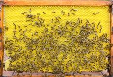 Marco de la colmena con las abejas Fotografía de archivo libre de regalías