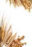 Marco de la cosecha Imagen de archivo libre de regalías