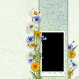 Marco de la elegancia con las flores del verano Fotografía de archivo