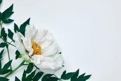 Marco de la esquina hecho de las hojas blancas de la peonía y del verde aisladas en blanco Imágenes de archivo libres de regalías