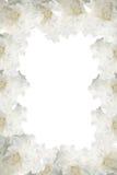 Marco de la flor Fotografía de archivo libre de regalías