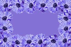 Marco de la flor Imágenes de archivo libres de regalías