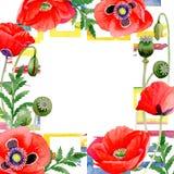 Marco de la flor de la amapola del Wildflower en un estilo de la acuarela Fotografía de archivo