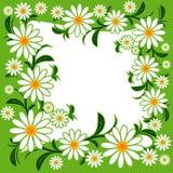 Marco de la flor con las manzanillas Foto de archivo