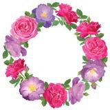 Marco de la flor con las rosas en el fondo blanco Fotos de archivo libres de regalías