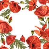 Marco de la flor de la amapola del Wildflower en un estilo de la acuarela aislado Imagen de archivo