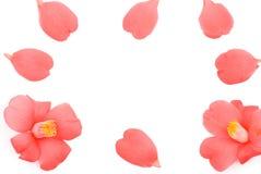 Marco de la flor de la camelia Imágenes de archivo libres de regalías