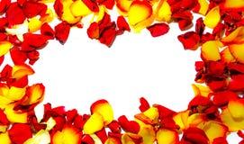 Marco de la flor de Rose como tarjeta romántica en el fondo blanco Fotografía de archivo libre de regalías