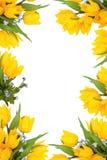 Marco de la flor del resorte Fotos de archivo libres de regalías