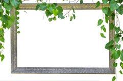 Marco de la foto con la hoja del verde de la naturaleza Foto de archivo