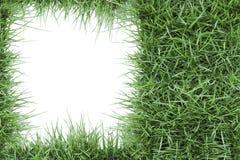 Marco de la foto de la hierba verde Imagen de archivo libre de regalías