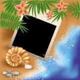 Marco de la foto del verano con la concha marina y las flores Fotografía de archivo