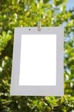 Marco de la foto en la fotografía del cordón, en el fondo de un árbol de limón imagenes de archivo